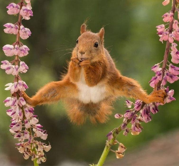 гимнастка.jpg